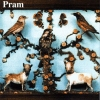 Pram - The Museum Of Imaginary Animals (2000)