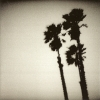 The Twilight Singers - Blackberry Belle (2003)